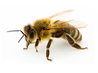 bees and wasps infestation afederal exterminating brooklyn nyc